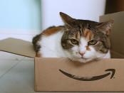 Stephen Woods,  Amazon cat, Flickr