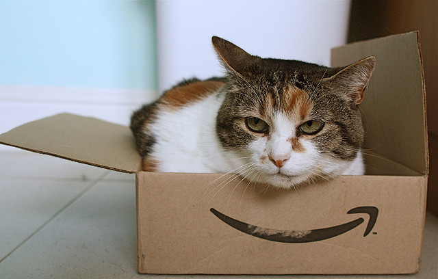 Stephen Woods,  Amazon cat, Flickr